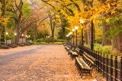 Central Park at The Mall in New York City