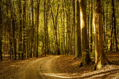 Early autumn forest on sunny day. Woods in Styria, Austria