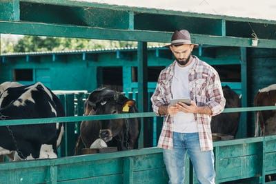 bearded farmer in hat using digital tablet while standing near cows and working in stall