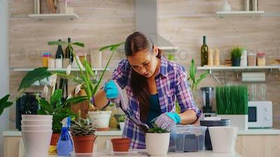 Replanting flower in bigger pot