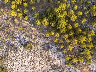 Sparsely vegetated barren landscape