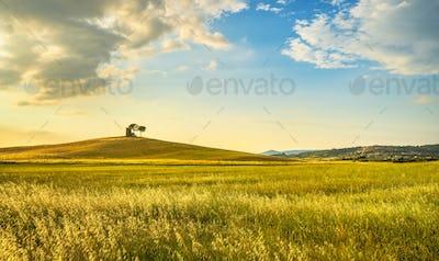 Sunset landscape in Maremma. Bibbona,Tuscany, Italy