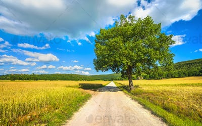 Monteriggioni, wheat field and tree on the via francigena. Siena, Tuscany. Italy