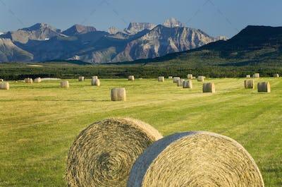Hay bales in farm field in rural landscape