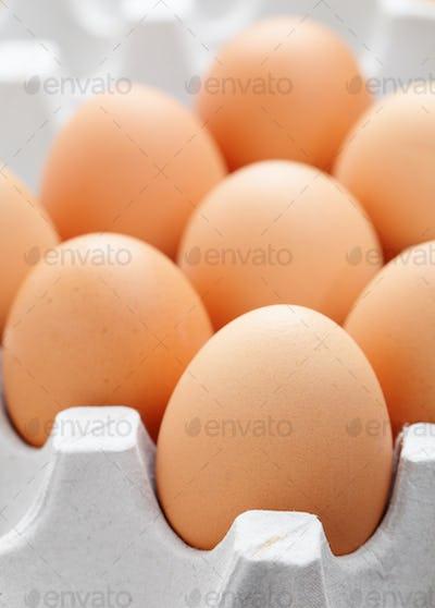 egg in box