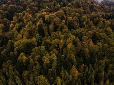 Colorful Autumn Foliage in Dense Forest. Aerial Drone View