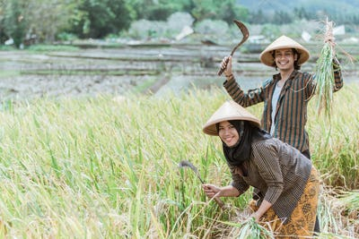 Happy farmers with their hands raised carrying rice plants and sickle while harvesting
