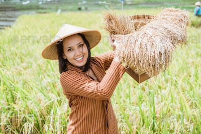 Asian female farmer in hats stand with rice plants in woven bamboo basket