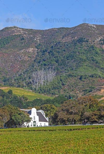 Groot Constantia in Cape Town