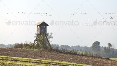 Hunting tower with flock of flying bird in background.