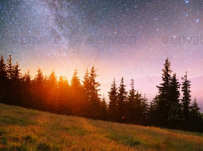 Fantastic starry sky and the milky way above the pinnacles of the pines