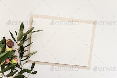 Blank paper and olive branch
