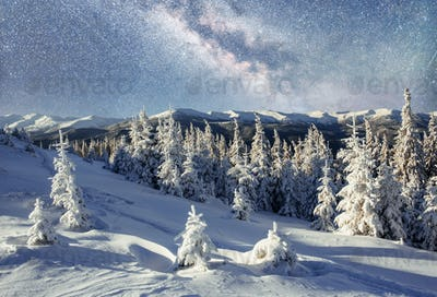 Dairy Star Trek in the winter woods