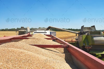Combine harvester in action on wheat field. Harvesting is the process of gathering a ripe crop from