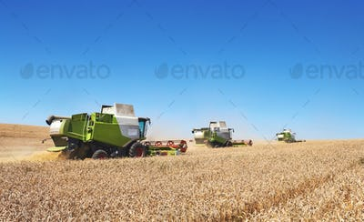 A few combines cutting a swath through the middle of a wheat field during harvest