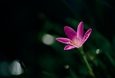 A tiny pink flower on a rainy day