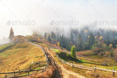 Morning fog creeps with scraps over autumn mountain forest covered in gold leaves