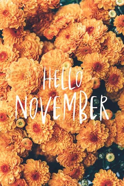 Hello November text and chrysanthemum