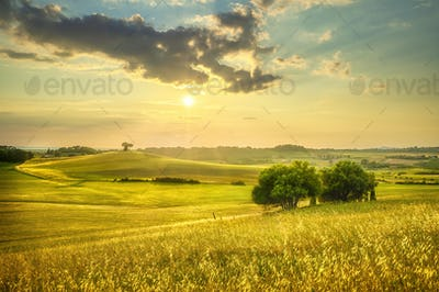 Sunset landscape in Maremma. Rolling hills and trees. Bibbona,Tuscany, Italy
