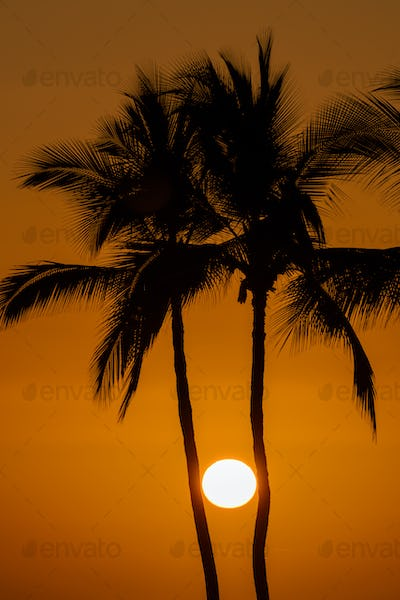 Sun between silhouette of palm trees