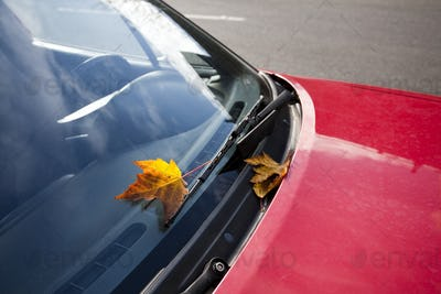 Leaf on Windshield of Red Car