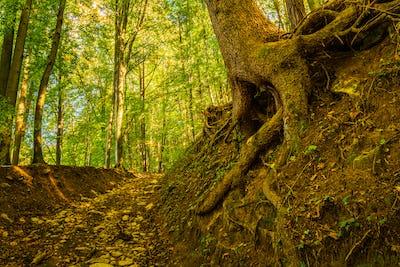 Trail through lush green forest in Styria, Austria