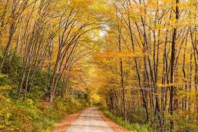 Forest Road in Autumn Season