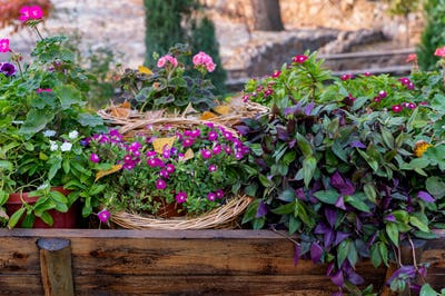 Close up of different decorative colorful potted plants outdoors