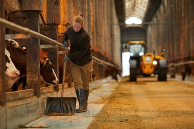 Young Woman Cleaning Cow Shed at Farm