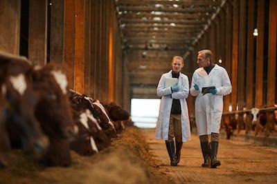 Veterinarians Inspecting Livestock at Farm