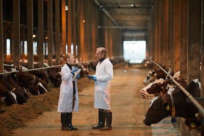 Two Vet Technicians at Dairy Farm