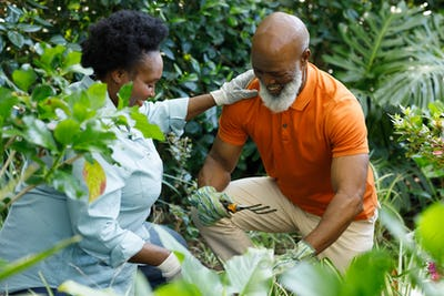 Senior african american couple spending time in garden together