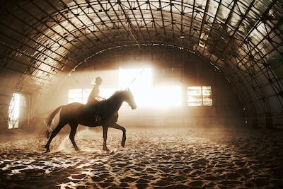 Majestic image of horse horse silhouette with rider on sunset background. The girl jockey on the