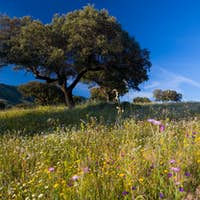 Landscape with trees and wildflowers near Guadalupe, Extremadura, Spain.