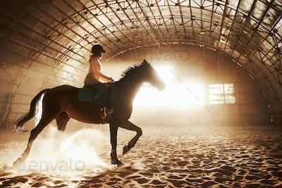 Majestic image of horse horse silhouette with rider on sunset background. The girl jockey