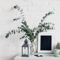 houseplants with blank chalkboard in front of white brick wall, mockup concept