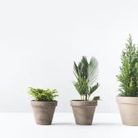 beautiful various green home plants growing in pots on white