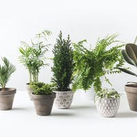 close-up view of various beautiful green plants in pots on white