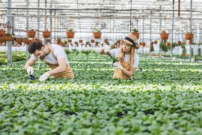 Smiling gardeners planting flowers in greenhouse