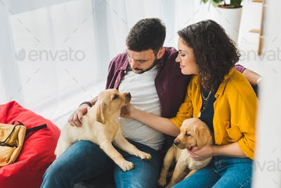 Man and woman holding two labrador puppies on sofa