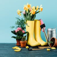 close up view of arranged rubber boots with flowers, flowerpots, gardening tools on wooden tabletop