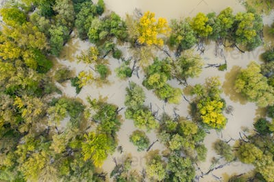 Green and yellow trees in swamp with water flowing around them during flood