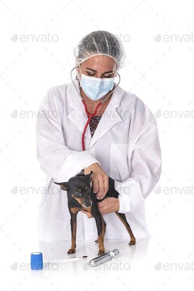 pinscher and vet