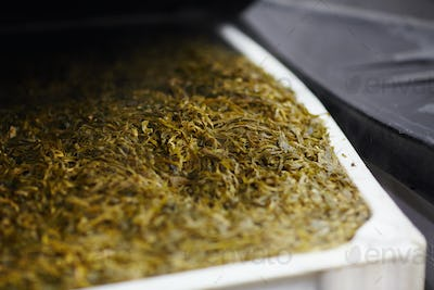 Seaweed for processing