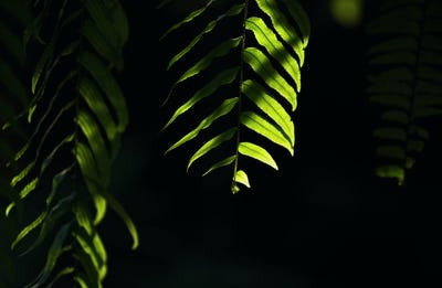 Background of light and shadow on fern leaves
