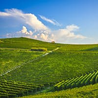 Langhe nebbiolo vineyards, Barolo, Piedmont, Italy.
