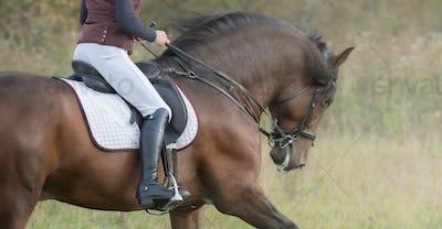 Horsewoman riding horse.