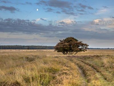 Natural heathland landscape near Hijken
