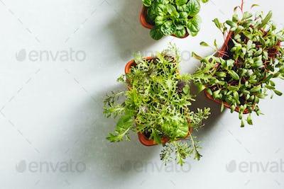 Young organic greens
