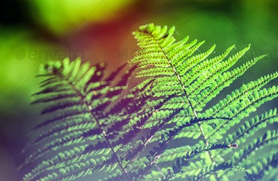 Fern in wild forest flora close up, ecology nature macro